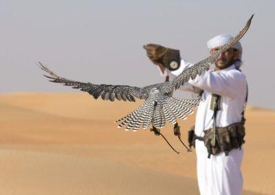 desert safari 3